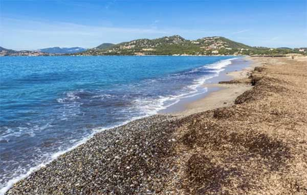 Long and beautiful beach of l'almanarre